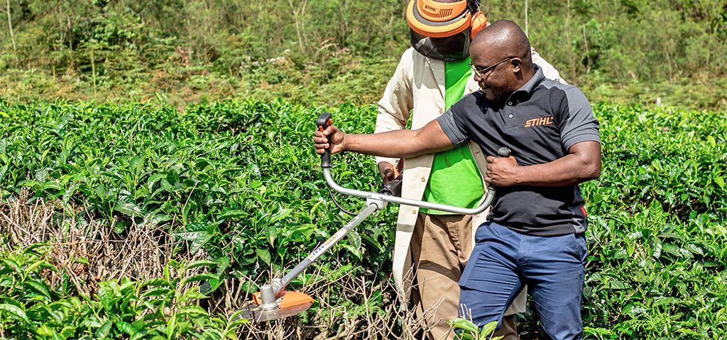 Landwirtschaft in Afrika