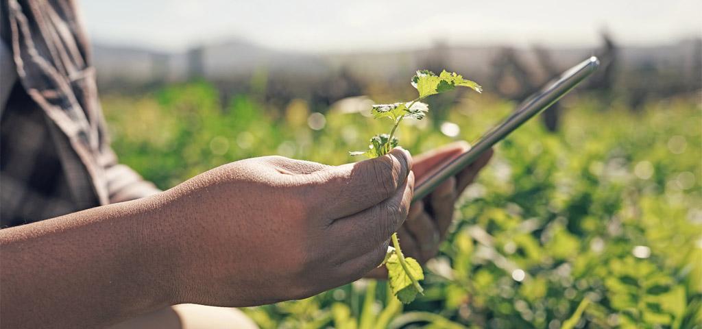 Mann mit Tablet bei der Arbeit auf einer Farm in Kenia