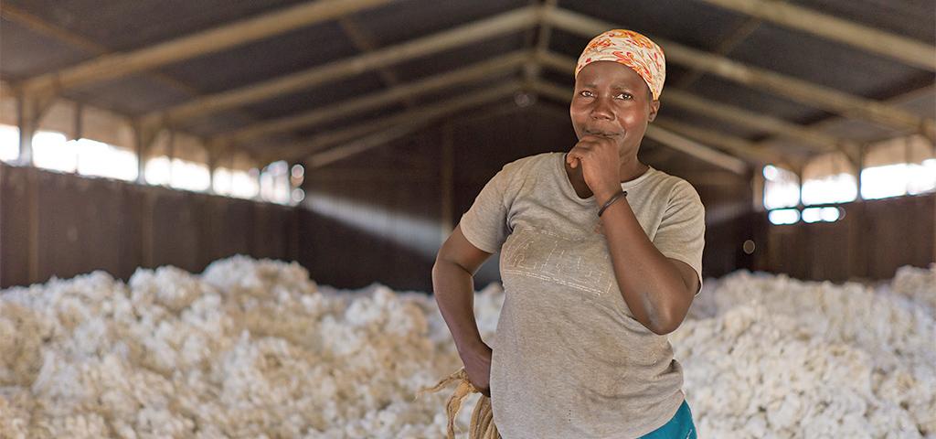 Biologischer Baumwollanbau in Uganda, verschiedene Arbeitsschritte
