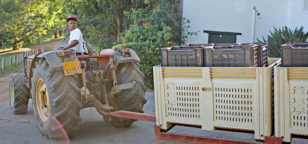 Traktorfahrer mit Kisten voller Trauben