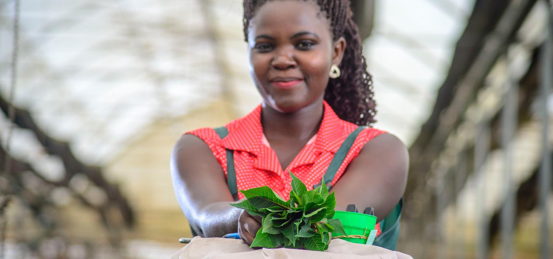 Wagagai ist Ugandas größter Produzent von Pflanzen-Stecklingen